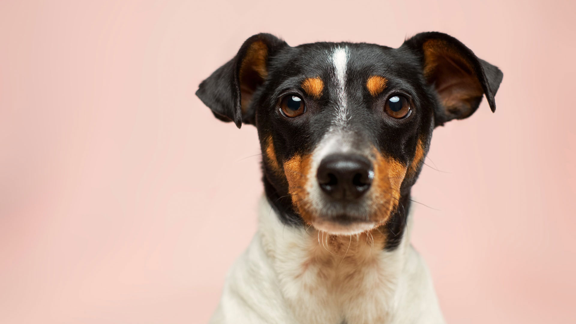 Pet Food & Supplies Prescott, AZ | Preskitt's Pawz n Clawz