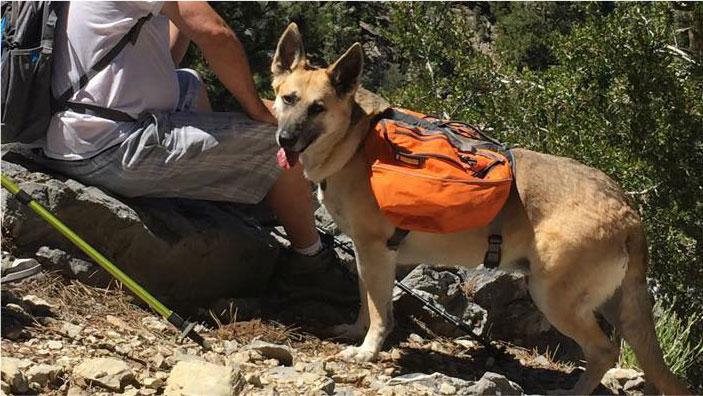 Kelcee Backpacking | Dog Backpacking Gear