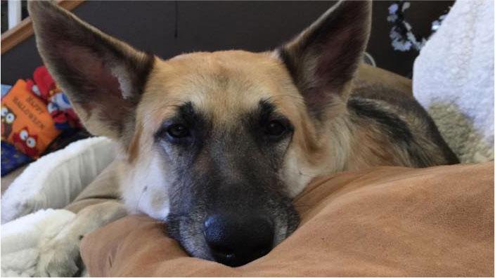 Kelcee Pillow | Pet Accessories Store | Preskitt's Pawz n Clawz