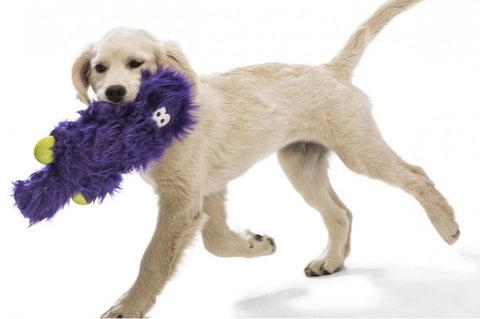 Best Pet Toys Shop | Preskitt's Pawz n Clawz