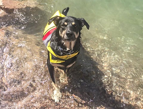 Best Outdoor Gear for Dogs | Pet Accessories